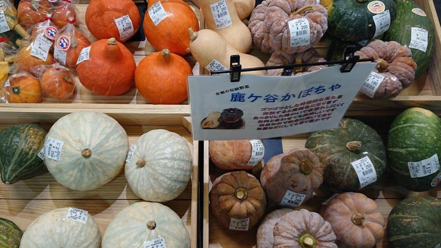 初心者は、かぼちゃ栽培を始めましょう。【画像で見る南瓜の育て方】