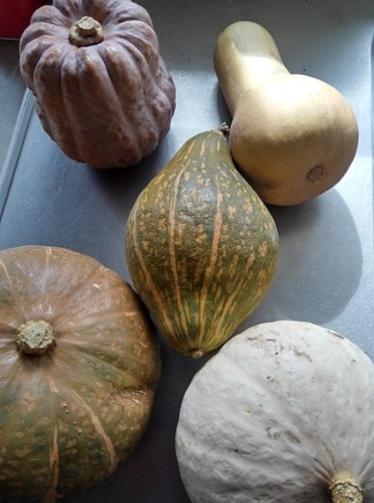 煮物に合うかぼちゃ【美味しい野菜が食べたい】
