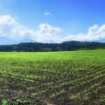 農業体験はするべき【農業が好きになった理由】