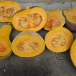 日持ちの実験 【かぼちゃの品種】