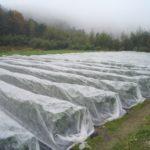 農薬を使わない。野菜に害虫を寄せ付けない方法 【不織布・防虫ネットの使い方】