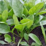 野菜の栄養分析と土壌診断。【その結果は!失敗して分かった事】