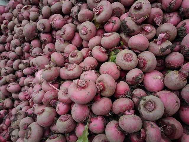 赤カブの作り方【日本の蕪は地域に根付いた伝統野菜、だから美味しい】