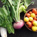 土づくり、有機質肥料の使い方【地力とは】