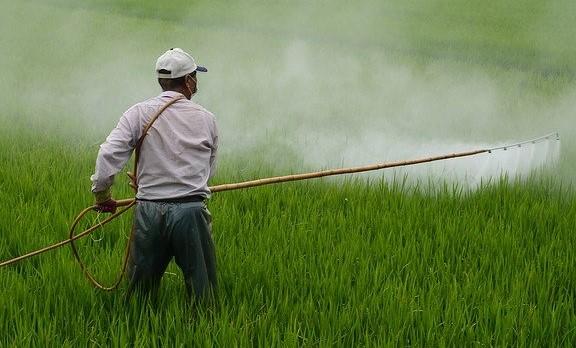 野菜栽培に農薬を使う【全ての野菜は農薬が必要なのでしょうか】