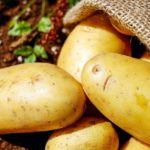 じゃがいもの品種が多い理由。【種芋から違う、ジャガイモの育て方】