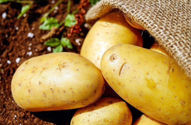 ジャガイモの品種が多い理由と育て方【原産国を知ればジャガイモを育てる楽しみが増えてくる】