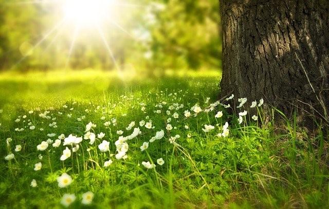 植物の呼吸、光合成の型とは【光合成の仕組み】