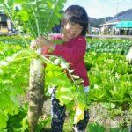 大根栽培は調理によって品種を使い分ける【辛い大根と甘い大根の違い】