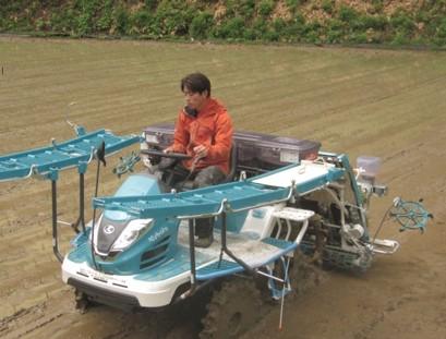 田植え作業を楽しもう。動画あり【水稲栽培技術・田植え機・田植え体験】