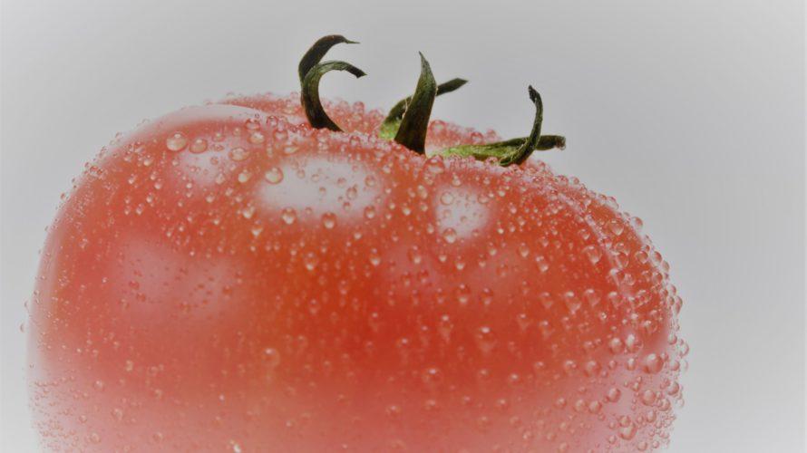 トマトを育てるのがもっと楽しくなる方法。着果の仕組みをわかりやすく解説 【花と栽培の仕方】