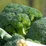ブロッコリーの栽培 農家が見ているは外葉【管理の方法 家庭菜園】