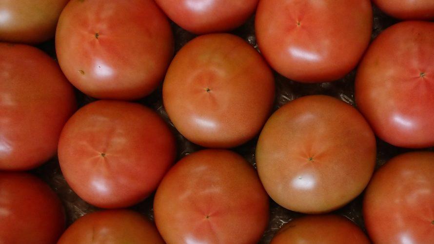 大玉トマトを長く栽培する方法【摘果と日射を考えて】