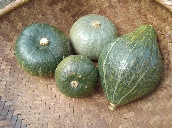 かぼちゃの育て方 【収穫のタイミングと貯蔵の方法】