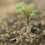 連作障害について【野菜を栽培することは、不自然で土がやせ病害がでる】その対処法