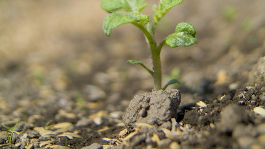 連作障害について【野菜を栽培することが、不自然で土がやせる】その対処法