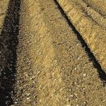 連作障害について【土がやせる原因とその対処方法】