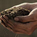 土の作り方【花壇や野菜の育苗培養土を自分で作る方法】