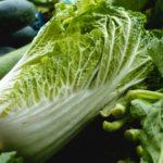白菜の育て方【栽培のまとめを画像で解説】